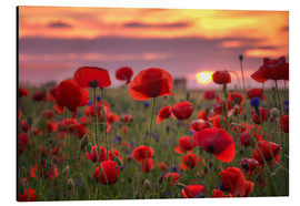Alu-Dibond  Poppies in sunset - Steffen Gierok