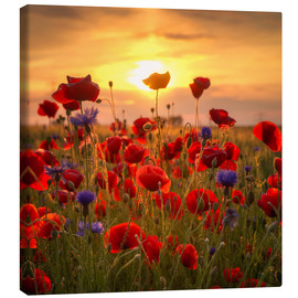 Canvas print  Poppy field - Steffen Gierok