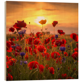 Wood print  Poppy field - Steffen Gierok