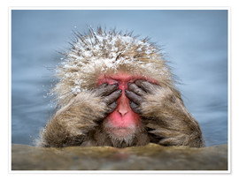 Premium poster  Japanese snow monkey in Jigokudani Monkey Park while bathing - Jan Christopher Becke