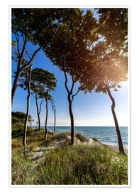Premium poster Tall Trees at the Baltic Sea