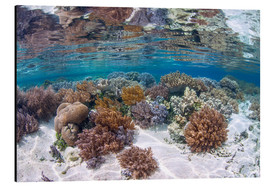 Aluminium print  A healthy and diverse coral reef grows in Raja Ampat, Indonesia. - Ethan Daniels