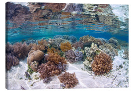 Canvas print  A healthy and diverse coral reef grows in Raja Ampat, Indonesia. - Ethan Daniels