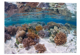 Foam board print  A healthy and diverse coral reef grows in Raja Ampat, Indonesia. - Ethan Daniels