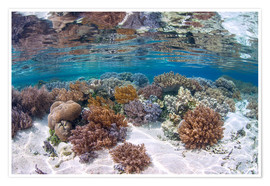 Premium poster  A healthy and diverse coral reef grows in Raja Ampat, Indonesia. - Ethan Daniels