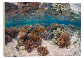 Wood  A healthy and diverse coral reef grows in Raja Ampat, Indonesia. - Ethan Daniels
