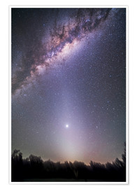 Premium poster  Venus in zodiacal light. - Alan Dyer