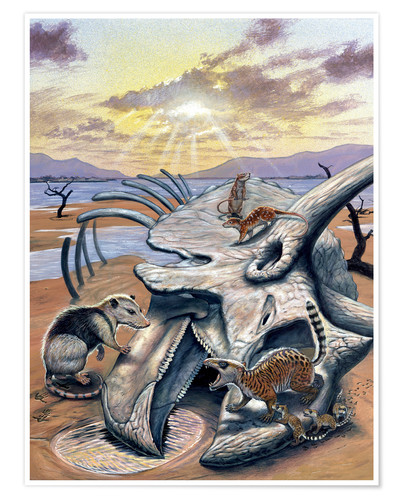 Premium poster Triceratops skull with early mammals.