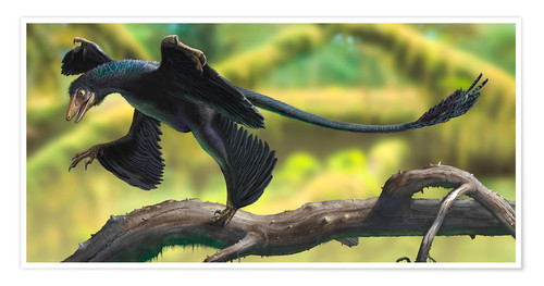 Premium poster A Microraptor perched on a tree branch.