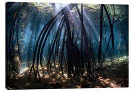 Canvas print  Beams of sunlight in a mangrove forest - Ethan Daniels