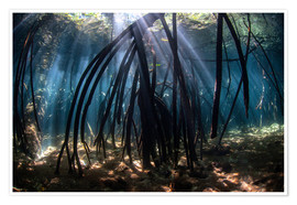 Poster  Beams of sunlight in a mangrove forest - Ethan Daniels
