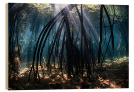 Wood  Beams of sunlight in a mangrove forest - Ethan Daniels