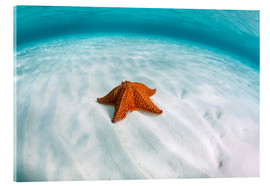 Ethan Daniels - A West Indian starfish on the seafloor in Turneffe Atoll, Belize.