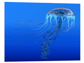 Foam board print  A blue spotted jellyfish illustration. - Corey Ford