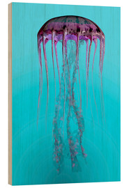 Wood print  Pelagia noctiluca jellyfish illustration. - Corey Ford