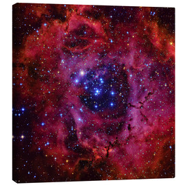 Canvas print  The Rosette Nebula - Roberto Colombari