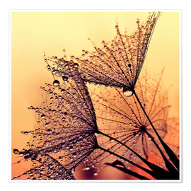 Premium poster Dandelion sunset dream