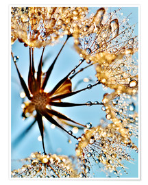 Premium poster Dandelion thousands drops