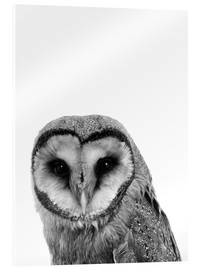 Acrylic print  The owls are not what they seem - Finlay and Noa