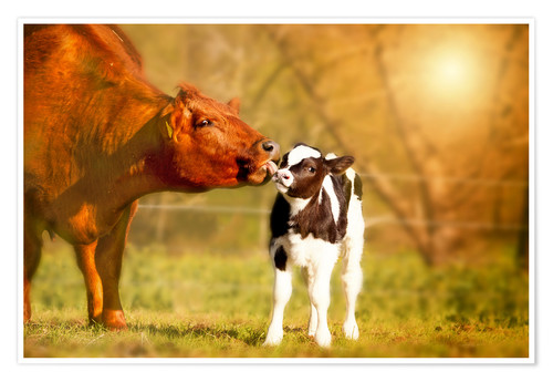 Premium poster Cow and calf in the pasture