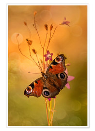 Premium poster Peacock butterfly on bell flowers