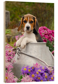 Wood  Cute Beagle dog puppy in a milk can - Katho Menden