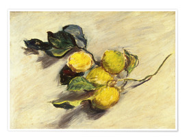 Poster  Branch a lemon tree - Claude Monet