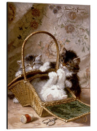 Aluminium print  Young cats with a sewing basket - Henriette Ronner-Knip