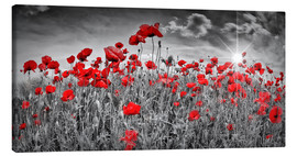 Canvas print  Idyllic poppy field with sun - Melanie Viola