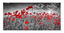Premium poster Idyllic poppy field with sun