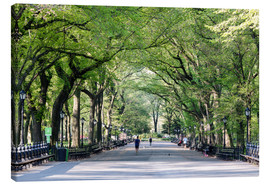 Canvas  The Mall in spring, Central park, New York city, USA - Matteo Colombo