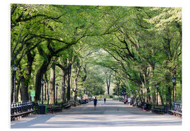 Foam board print  The Mall in spring, Central park, New York city, USA - Matteo Colombo
