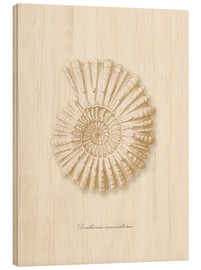 Wood print  Amonite spiral - Patruschka
