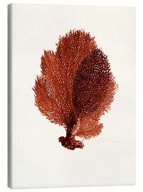 Canvas print  Red coral, fans - Patruschka