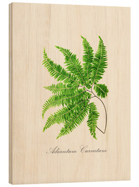 Wood print  ferns6 - Patruschka