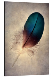 Alu-Dibond  Blue parrot feather - Jaroslaw Blaminsky
