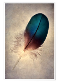 Poster  Blue parrot feather - Jaroslaw Blaminsky