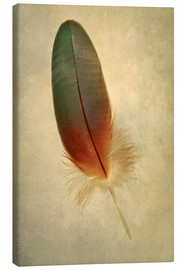 Canvas print  Green parrot feather - Jaroslaw Blaminsky