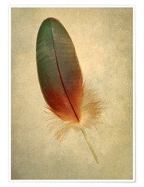 Poster  Green parrot feather - Jaroslaw Blaminsky