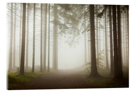Acrylic print  Magic Forest - Fog - Mikolaj Gospodarek