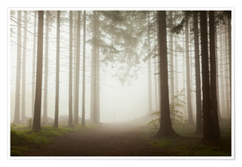 Premium poster Magic Forest - Fog