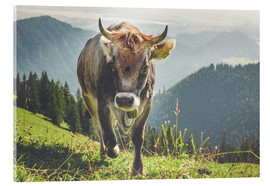 Acrylic print  Cow in the mountains - Michael Helmer