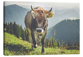 Canvas print  Cow in the mountains - Michael Helmer