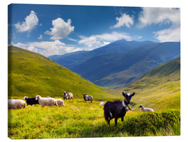 Canvas print  Herd of sheep and goats in the mountains