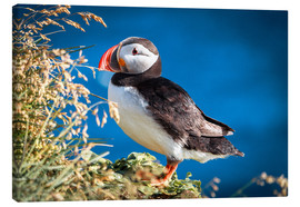 Canvas print  Puffin on Iceland - Sascha Kilmer