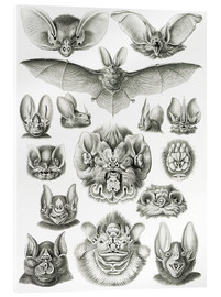 Acrylic print  Bats, heads and faces - Ernst Haeckel
