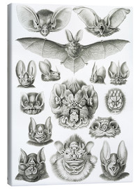 Canvas print  Bats (Forms of nature, graphic 67) - Ernst Haeckel