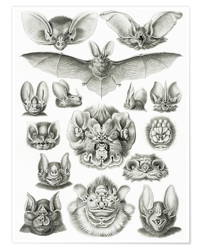 Premium poster Bats (Forms of nature, graphic 67)
