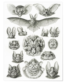 Poster  Bats, heads and faces - Ernst Haeckel