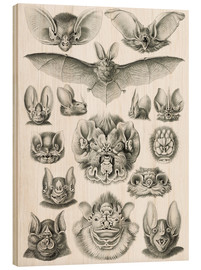 Wood print  Bats (Forms of nature, graphic 67) - Ernst Haeckel